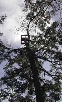 Osprey platform places high on a treetop