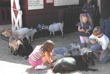 Kids and goats mix well