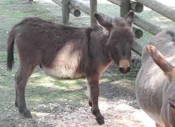 Baby donkey at the farm