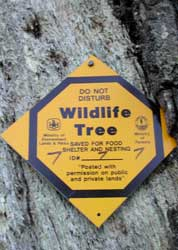 New sign on reverse side of the Bee Tree