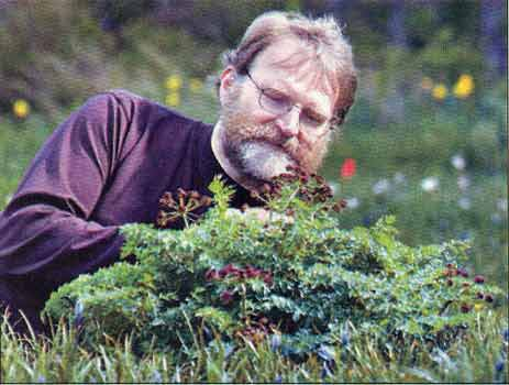 Fred Hook checking Chocolate Tip plant